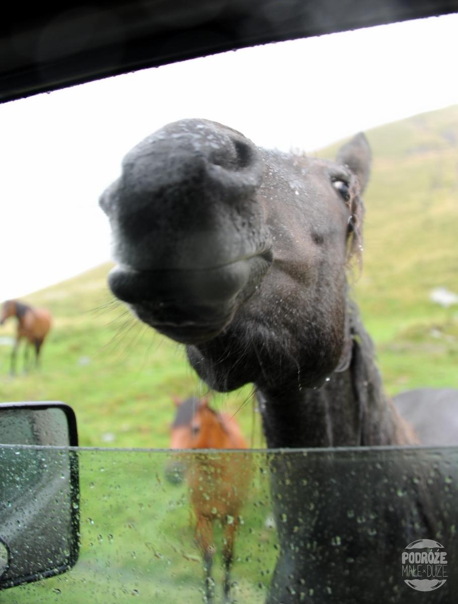 Rumunia droga trasa Transfogaraska konie