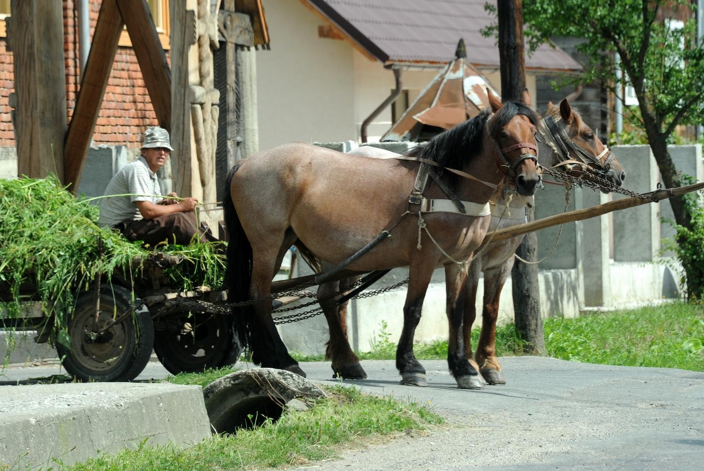 Rumunia okręg Maramuresz