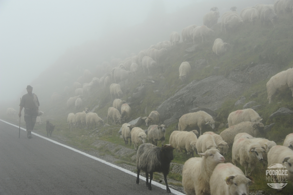 Rumunia droga trasa Transfogaraska owce