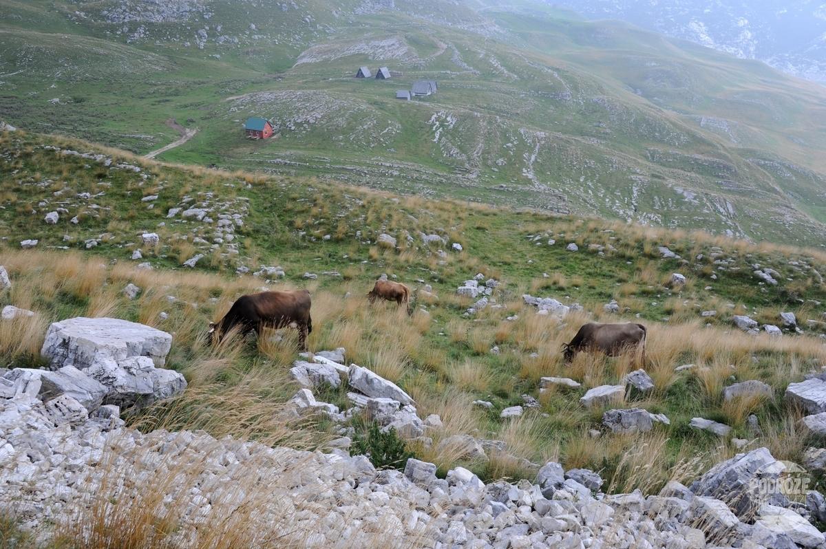 czarnogóra park narodowy Durmitor