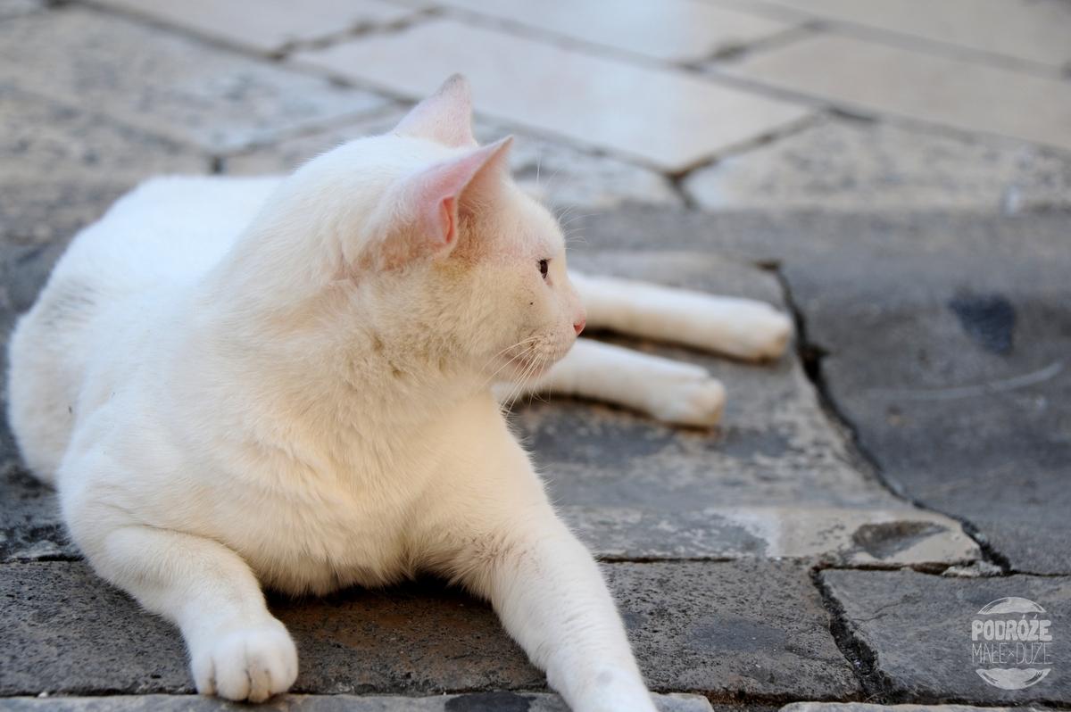 chorwacja dubrownik kot