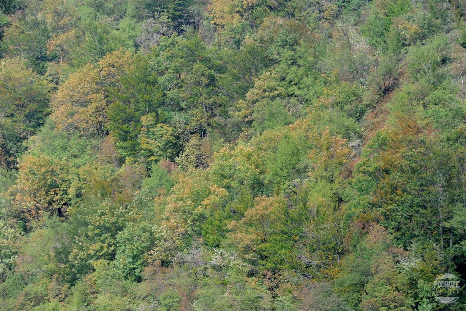 Chorwacja Jeziora Plitwickie Park Narodowy drzewa