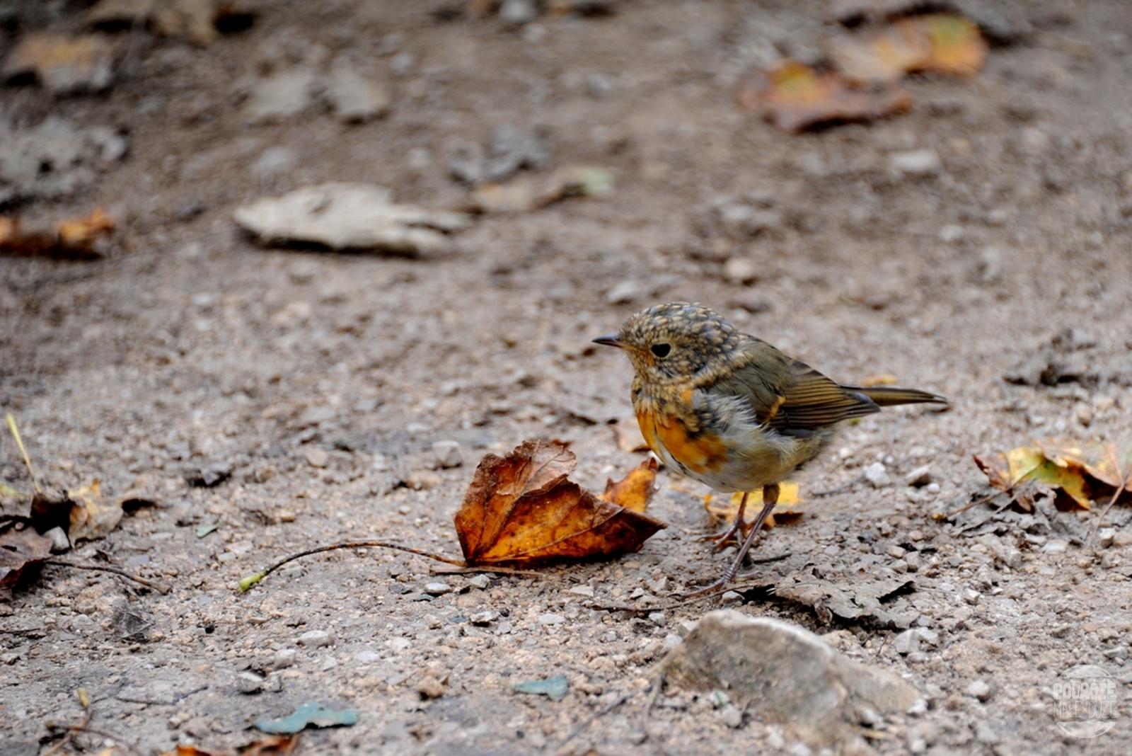 Chorwacja Jeziora Plitwickie Park Narodowy ptak