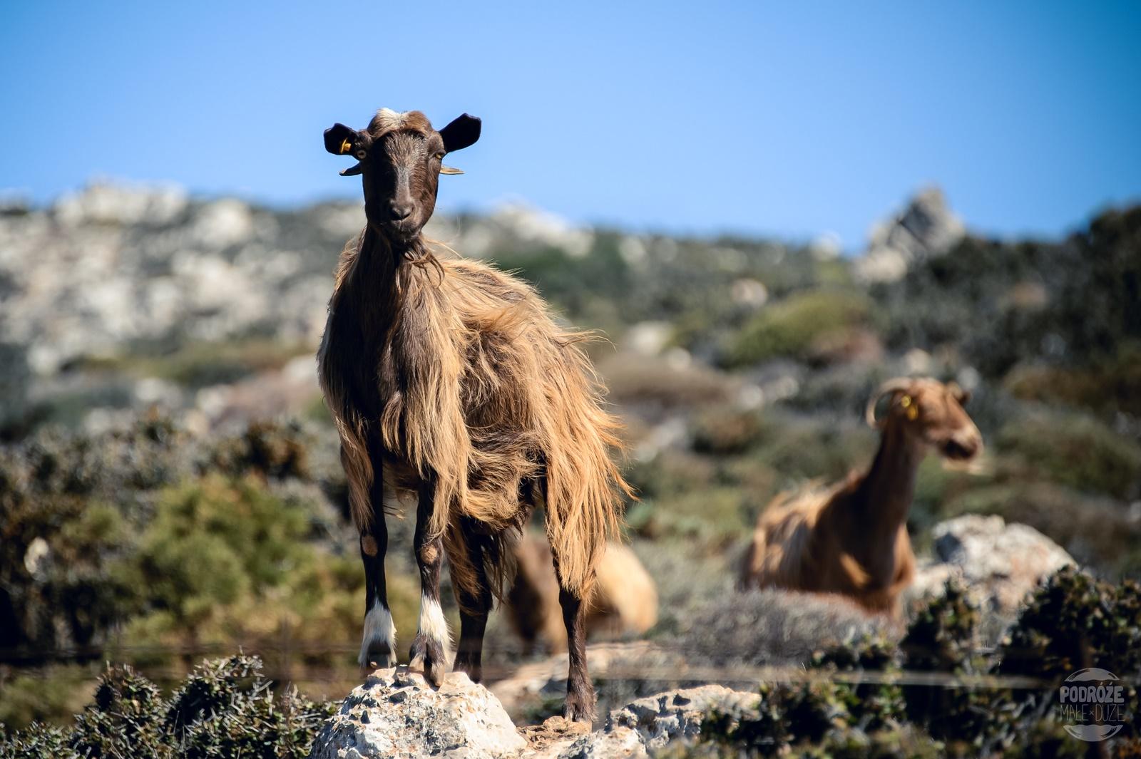kreta kozy