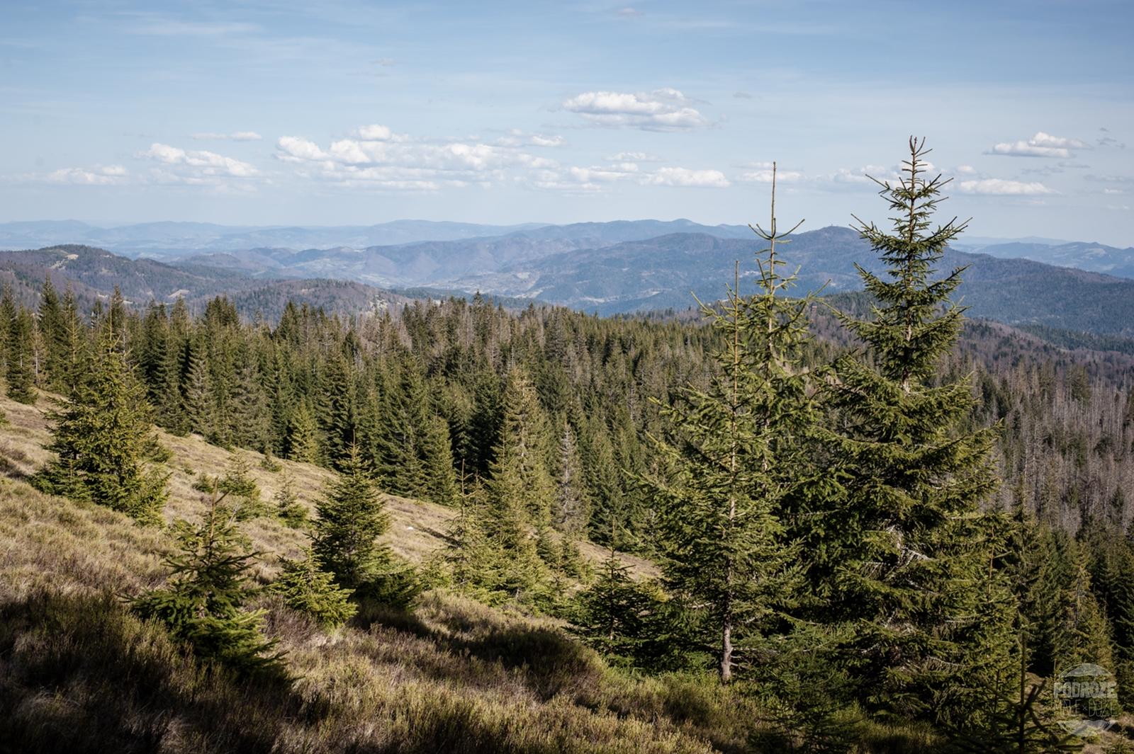 Szlak czerwony i czarny na Turbacz. Góry Gorce. Trekking