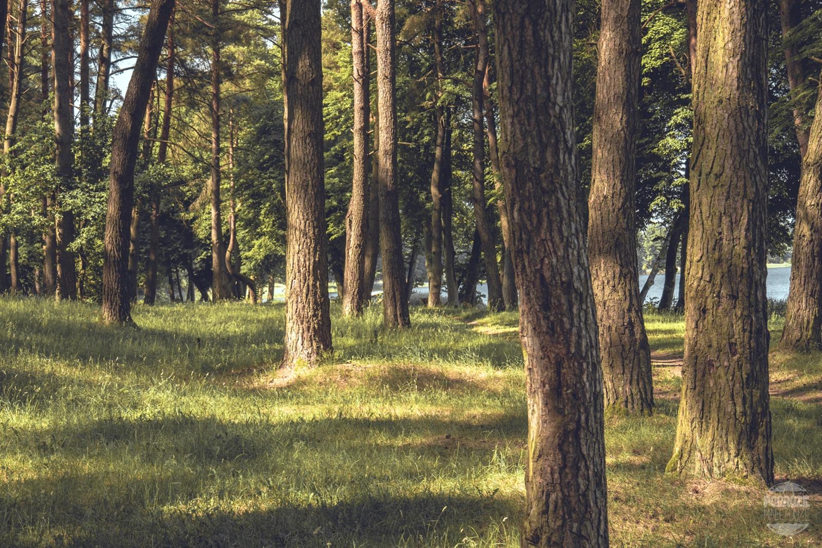 Warmia i Mazury jezioro boczne las