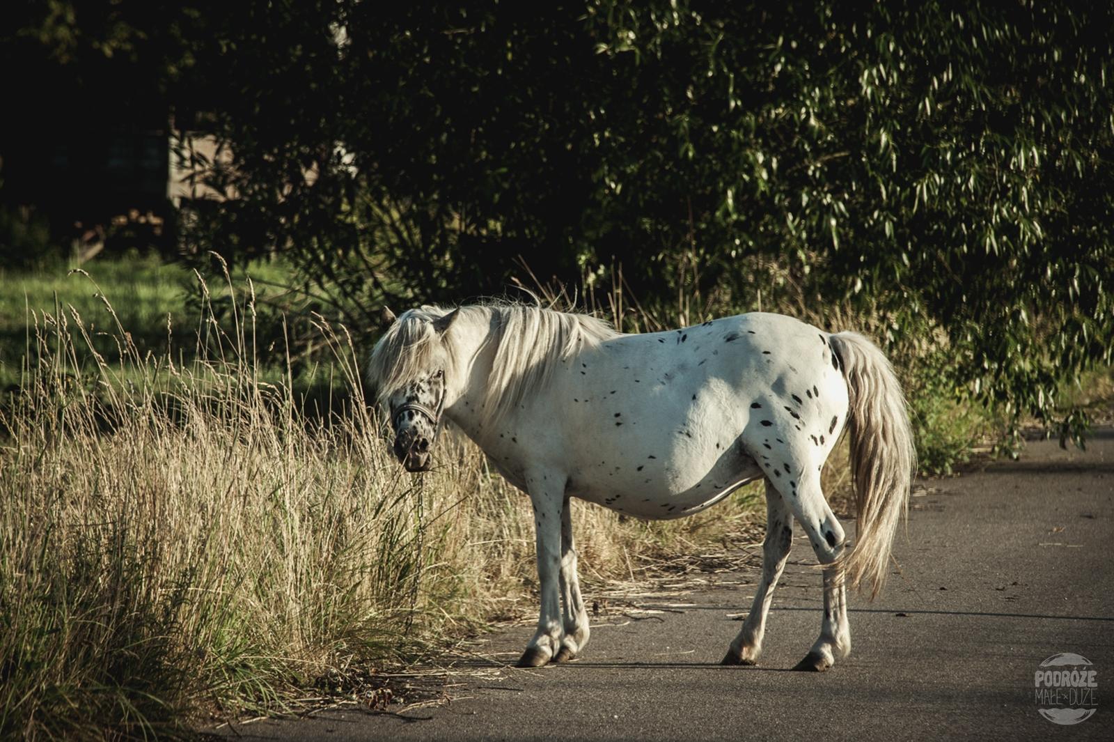 podlasie Narwianski Park Narodowy koń