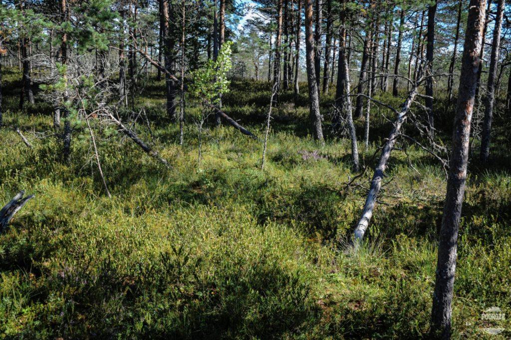 ESTONIA PARK NARODOWY SOOMAA